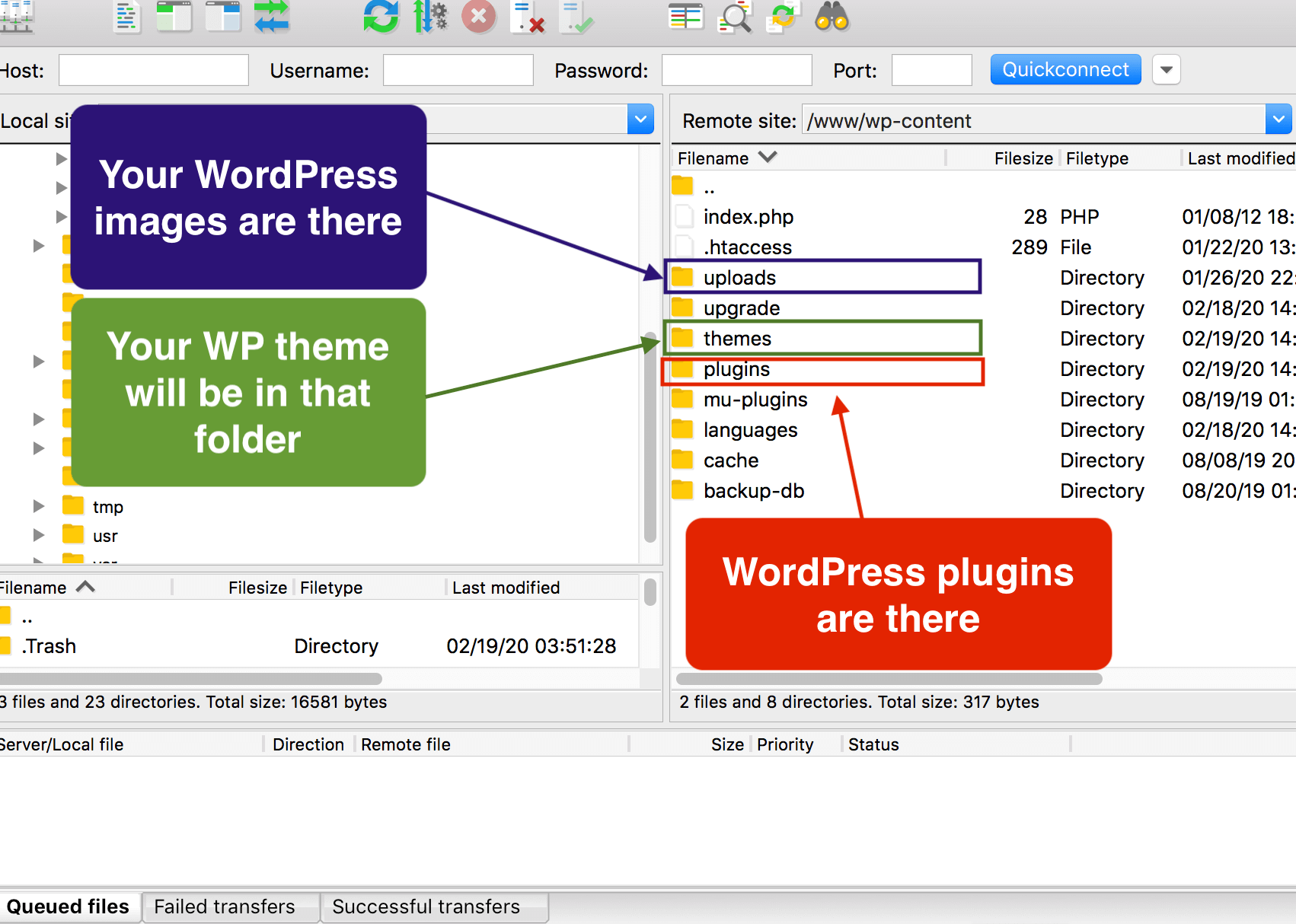 """wp-uploads"", ""themes"" and ""plugins"" folders"